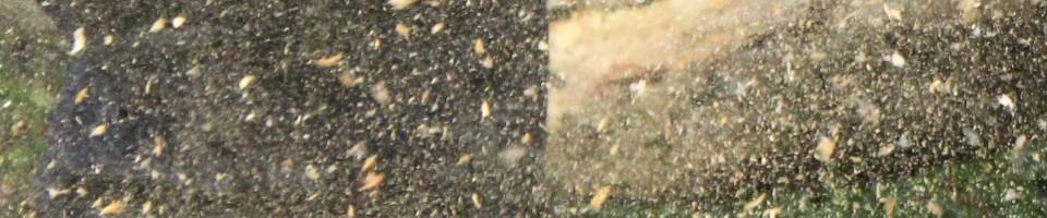 cropped-sawdust4.jpg