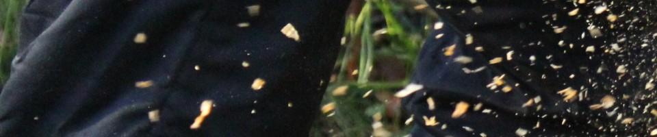 cropped-sawdust15.jpg
